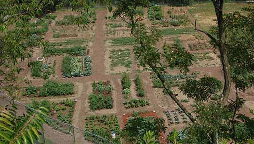 2)Bandi Schaum Community Garden