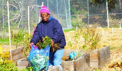 4)MLK Community Garden