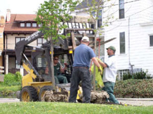Heavy B&B trees often require mechanical means to lift the weight. More than one muscular person may roll or slide the root ball into the planting hole